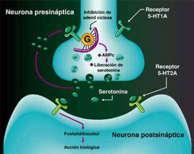 Los neurotransmisores: